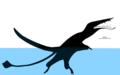 Klobiodon rochei Schematic.png
