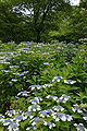 Kobe municipal forest botanical garden36s5s3200.jpg