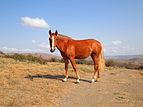 Koktebel - horse.jpg