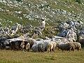 Kopeja e deleve.JPG