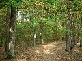 Kowanowko forests, gm. Oborniki (15).JPG