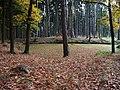 Kunratický les, jezírko.jpg