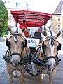 Kutschenpferde in Maastricht, 2009.jpg