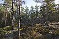 Kylmäkorvenkallion pronssikautinen hautaröykkiö 06.jpg