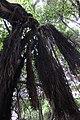 LORO Parque - panoramio (1).jpg