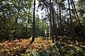 LSG Forst Rundshorn nahe Würmseeweg IMG 9893.jpg