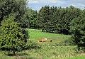 Landschap bij Vijlen - panoramio.jpg