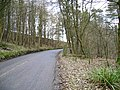 Laund Wood - geograph.org.uk - 111724.jpg