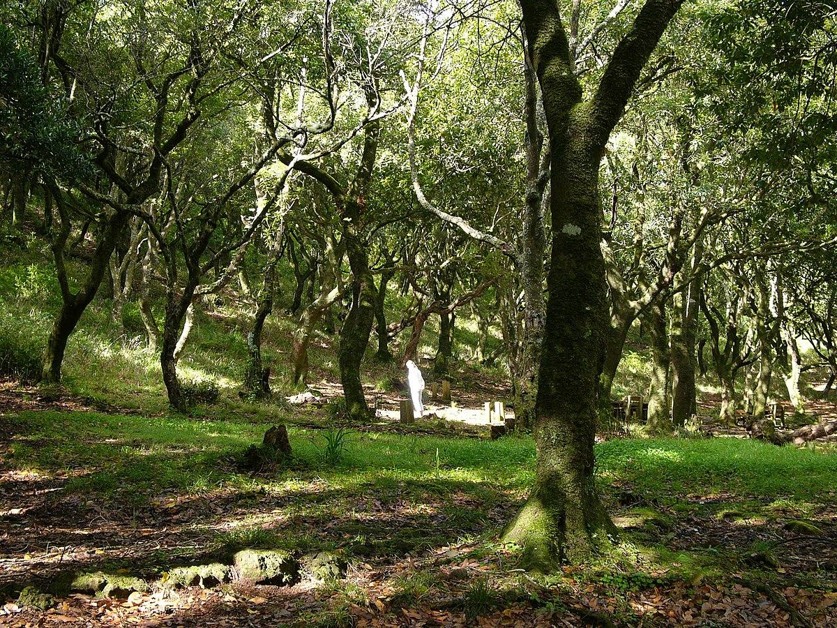 Laurel forest - Wikipedia
