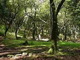 マデイラ島の照葉樹林