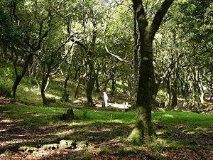 Laurel forest - Laurel forest in Madeira
