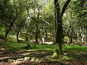Laurel forest - Laurel forest in Madeira