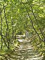 Le Cavallaie-paesaggio 39.jpg
