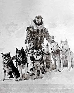 Togo (dog) Sled dog who ran in the 1925 serum run to Nome, Alaska