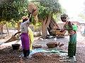Les femmes trient le riz Ⓒ J Cavaillon. mention obligatoireDSCN0041.JPG