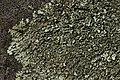 Lichen (42119052862).jpg