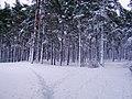 Lielupe - panoramio (11).jpg
