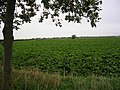 Lincolnshire field - geograph.org.uk - 275146.jpg