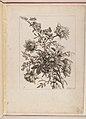 Livre de Toutes Sortes De Fleurs D'apres Nature MET DP210737.jpg