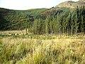 Loch Ard Forest - geograph.org.uk - 1036723.jpg
