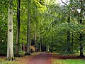 Loop Walk at Westonbirt Arboretum - geograph.org.uk - 69640.jpg