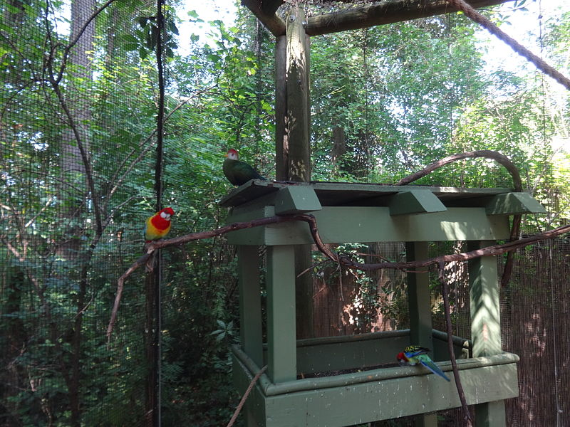 File:Lorikeets and Red-crested turaco, Wild Adventures 2015.jpg