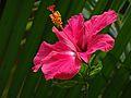 Love is the Flower.jpg
