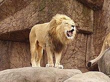 dans LION