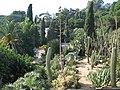 MARiMUTRA 007 - Cactus 3 - panoramio.jpg
