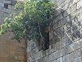MONASTERIO BONAVAL3 - panoramio.jpg