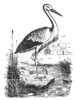 Ma-rahwa Kalender ehk Täht-ramat 1847 Ajastaja päle; illustration; wood engraving.png