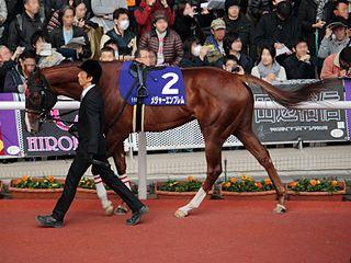 Major Emblem Japanese Thoroughbred racehorse