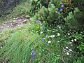 Malá Fatra, kvety v júli (1).jpg