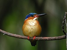 A small bird with a long beak, yellow chest, and dark wings and head sits perched on a branch.