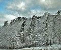 Manitowoc County Woods - panoramio.jpg