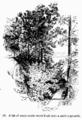 Manual of Gardening fig018.png