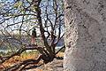 Maryhill Stonehenge 14.jpg