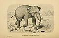 Mastodon Americanus.jpg