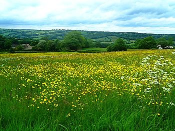 English: Meadow near Wilday Green.