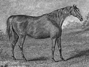 Medora (horse) - Medora at stud c. 1828 by John Nott Sartorius