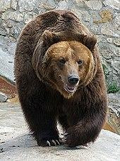 За то время, пока медведь находился в авто, от салона машины не осталось...