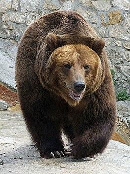 Секс рассказы бурый медведь фото 796-88