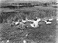 Meisjes met eenden bij een vijver, Bestanddeelnr 189-0853.jpg