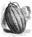 Melon sucrin à chair verte Vilmorin-Andrieux 1883.png