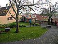 Merian garden.jpg