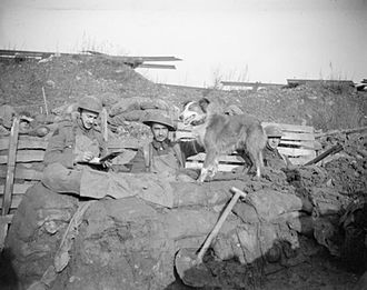 42nd (East Lancashire) Infantry Division - Trench message dog of 10th Manchesters waits while message is written, Cuinchy, 26 January 1918