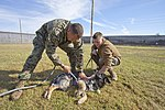 Military working dog bids farewell to working life 121114-M-KU760-500.jpg