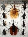 Missiemuseum Steyl-Tegelen, vlinders & geleedpotigen 11.jpg