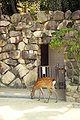 Icukušima – Wikipedie