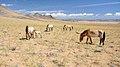 Mongolia 2012.jpg